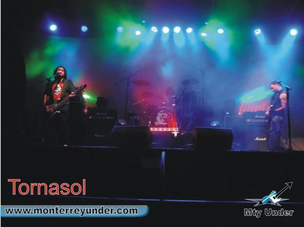 tornasol-large